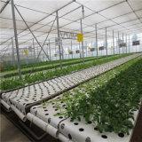 プラスチックフィルムシートのトマトのための農業の温室のトンネル