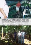 [أونيغروو] يمنع [أرغنيك فرتيليسر] [ميكروبيل] على موز يزرع, جذر عقدة ميل بحري [نمتود], باناما مرض
