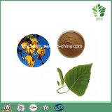 Flavona Natural 5%-10% del Extracto de la Hoja del Abedul del 100% Bueno para Diurético