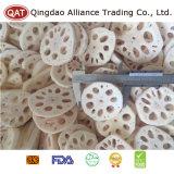 Gefrorene geschnittene Lotos-Wurzel für den Export