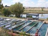 Abrir el tipo de canal esterilizador ULTRAVIOLETA para el tratamiento de aguas de las aguas residuales y de aguas residuales