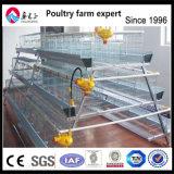 Pollos de capa, utiliza el sistema automático de la jaula de pollos de Pullet
