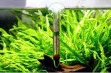 De drijvende Toebehoren van het Aquarium van de Thermometer van het Aquarium van de Tank van Vissen