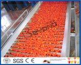 aufbereitende Zeile des Tomatenkonzentrates