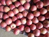 Buona qualità Qinguan rosso fresco Apple