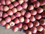 Buona qualità di Qinguan rosso fresco Apple