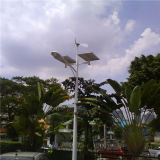 80W con Wind Hybrid Solar Street Palo Lighting (BDSW998)
