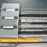 Конструкция Tianrui оцинкованной проволоки сетка кадр цыпленок слоя каркаса