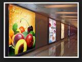 El mercado africano dio la bienvenida a 610gram 500dx500d 18X12 puesto a contraluz para el cartel del rectángulo ligero