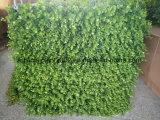 Nuevo diseño de las plantas para la Decoración de pared artificial