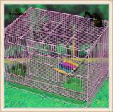 Naturellement les jouets d'animal familier/oiseau joue (KBB009)