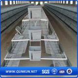 Sistema della gabbia del pollo di prezzi bassi