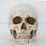 OEM crâne de résine artificielle de haute qualité