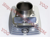 Moto Zylinder Cilindro Fach Skua-150