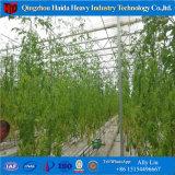 Serra commerciale di coltura idroponica per agricoltura