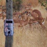 Дикой фауны и охота видео с камеры игры Trail камера с 16MP
