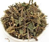 Haute qualité Clinopodium Chinse Herb Clinopodium chinensis Extrait Extrait//cassée Extrait de sang