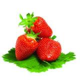 딸기 Powder/FDA의 제조자; ISO22000; 정결한; SGS; Halal