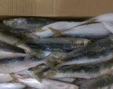 Fábrica chinesa preço congelado dos peixes da sardinha