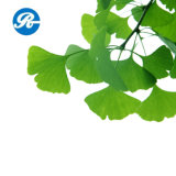 Flavones 24% Lactones 6% Extrait de Ginkgo Biloba