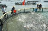 La cage de flottement de poissons dans la cage profonde de pêche de Sea/HDPE/PE