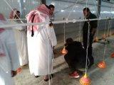 十分にカタールの環境の肉焼き器および繁殖動物の家のための制御された全家禽の農機具