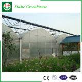 토마토와 꽃 성장을%s 직업적인 플레스틱 필름 온실
