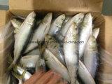 Para as conservas de sardinha em lata