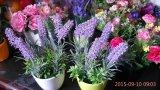 Fleurs artificielles de violette 33cm Gu-Jy912203502