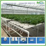 Nft Hydroponics System pour la laitue, le chou, les herbes, etc.