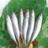 يشبع مجموعة من [ستينلسّ ستيل] طحين سمك [برودوكأيشن لين]