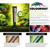 Colourway Großhandelsfachmann formuliert in der Italien-Salon-Gebrauch-Haar-Farbe