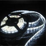 Alto CRI los 60LED/M del alto brillo tira de 5050 SMD LED