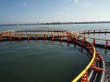 Preiswerter Preis-hohe Kapazitäts-sich hin- und herbewegender Fischzucht-Rahmen