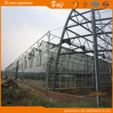 Venlo Structure를 가진 긴 생활 Span Glass Greenhouse