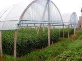 5.5 Mの幅の紫外線安定させた50の網の温室の反昆虫のネット