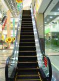 Escalera móvil larga del curso de la vida de la calidad estupenda para la alameda de compras