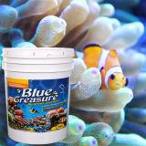 파란 보물 수족관 Sps 바다 소금