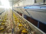 Máquina de aves de capoeira profissional personalizada para frangos de corte, galinhas de camada e criadores