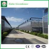 농업 설치를 위한 다중 경간 폴리탄산염 장 온실