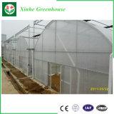De landbouw Serre van de Plastic Film van de Tunnel voor het Kweken van Groenten