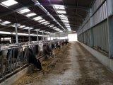 Edificio agrícola de la estructura de acero de la vertiente prefabricada agrícola de la vaca lechera