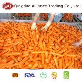 Высшее качество замороженных IQF измельченные моркови