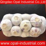 La Chine usine prix unique de gousse d'ail