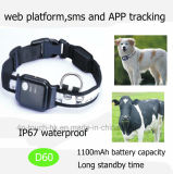Geo 담과 큰 건전지 수용량 D60를 가진 방수 애완 동물 GPS 추적자
