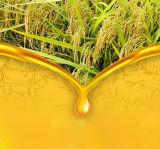 100 T/D de la línea de producción de aceite de salvado de arroz, la Refinería de aceite de salvado de arroz