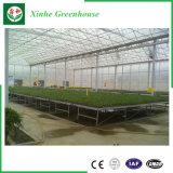 Neues Entwurf Muti Überspannungs-Polycarbonat-Gewächshaus-grünes Gemüsehaus mit Kühlsystem