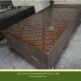 Brown Film Faced Plywood for Peru Market