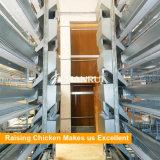 Слой ярусов рамки 8 h конструкции Tianrui автоматический поднимая клетку цыпленка