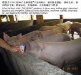 Unigrow Mikrobenzufuhr-Zusatz auf Schwein-Züchtung